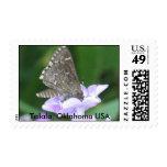 Moth in Flower Postage Stamp
