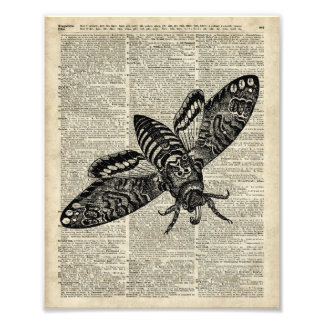 Moth Insect  Vintage Illustration on Old Book Page Photo Print