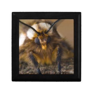 Moth Jewelry Box