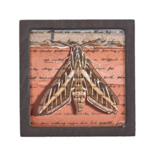 MOTH JEWELRY BOX