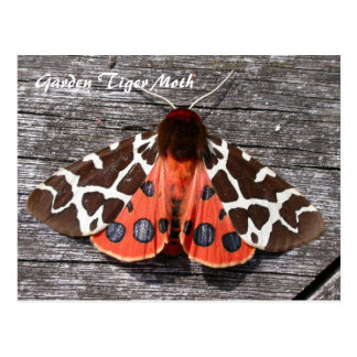 Moth Magic: Garden Tiger Moth postcard