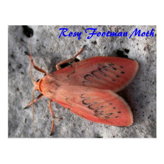 Moth Magic: Rosy Footman Moth postcard