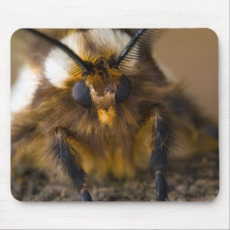 Moth Mouse Pad