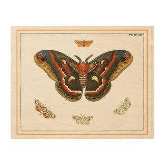 Moth Natural History Wood Wall Art