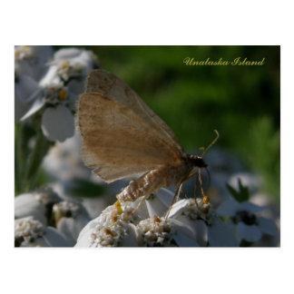 Moth on Yarrow Flowers Unalaska Island Postcards