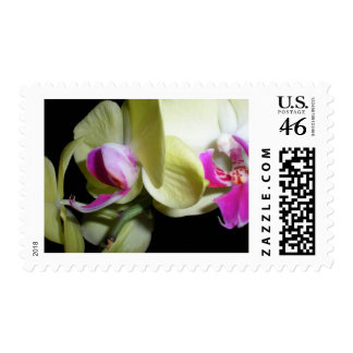 Moth Orchid Postage