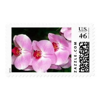 Moth Orchid stamp