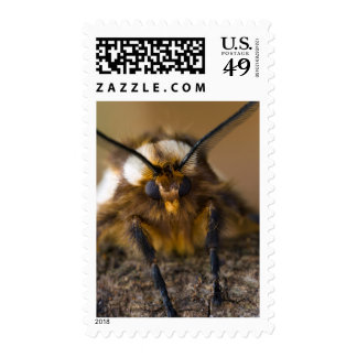 Moth Postage Stamps