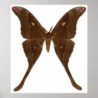 Moth Póster