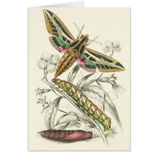 Moth Progression Note Cards