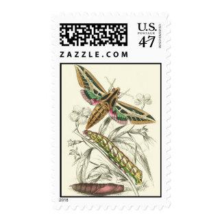 Moth Progression Postage Stamps
