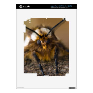 Moth Decal For iPad 3