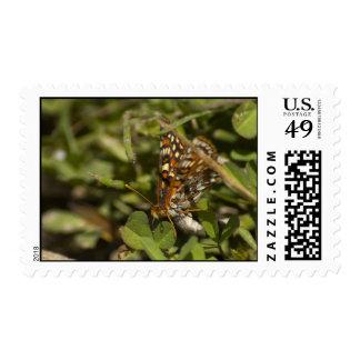 Moth Stamp 1