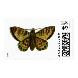 Moth with Black Spots Postage Stamp