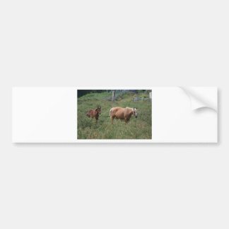 Mother and Babe Bumper Stickers