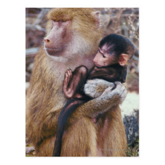 Mother and Baby Baboon Postcard