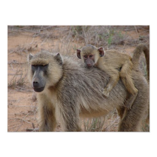 Mother and Baby Baboon Print