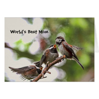 Mother and Baby Birds Card