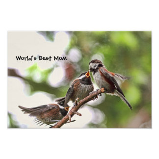 Mother and Baby Birds Photo Print