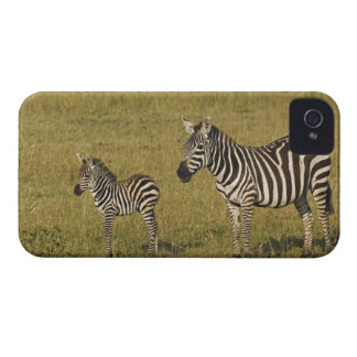 Mother and baby Burchell's Zebras, Equus iPhone 4 Case-Mate Cases