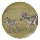 Mother and baby Burchell's Zebras, Equus Dinner Plate