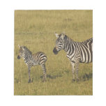 Mother and baby Burchell's Zebras, Equus Note Pad