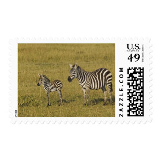 Mother and baby Burchell's Zebras, Equus Stamp