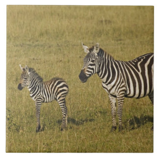 Mother and baby Burchell's Zebras, Equus Tile