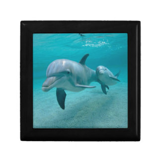 MOTHER AND BABY CALF DOLPHIN GIFT BOX