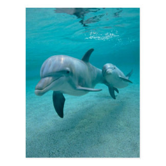 MOTHER AND BABY CALF DOLPHIN POSTCARD