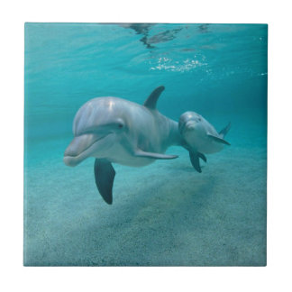 MOTHER AND BABY CALF DOLPHIN SMALL SQUARE TILE