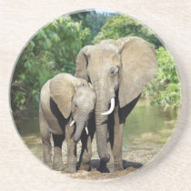 Mother And Baby Elephant Drink Coaster