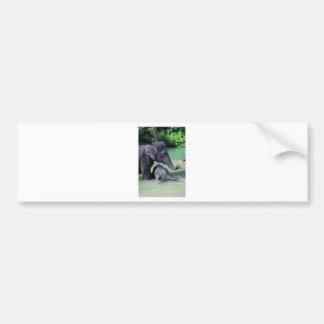 Mother and baby elephant in river bumper sticker