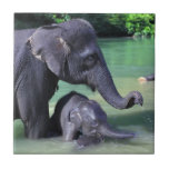 Mother and baby elephant in river tiles