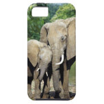 Mother And Baby Elephant iPhone 5 Cover
