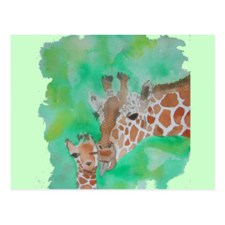 Mother and Baby Giraffe Postcard