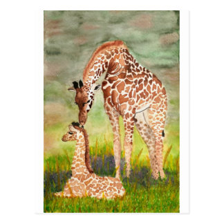 Mother and Baby Giraffes Postcard