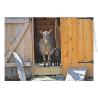 Mother and Baby Goat Notecard Card