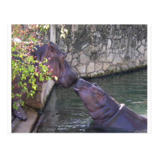 Mother and Baby Hippo Greeting Post Card