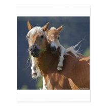 Mother and Baby Horse Postcard