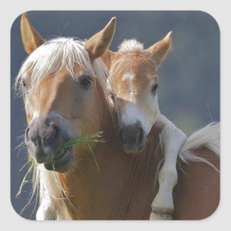 Mother and Baby Horse Square Sticker