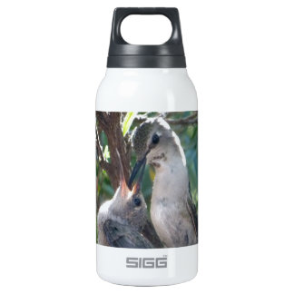 Mother And Baby Hummingbird Insulated Water Bottle