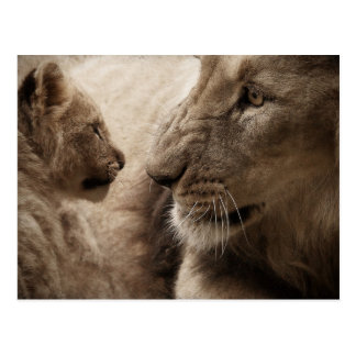 Mother and Baby Lions Postcard