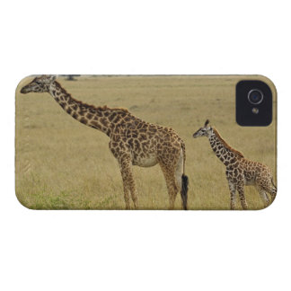 Mother and baby Masai Giraffe, Giraffa 2 iPhone 4 Case-Mate Cases