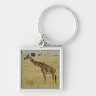 Mother and baby Masai Giraffe, Giraffa 2 Keychain