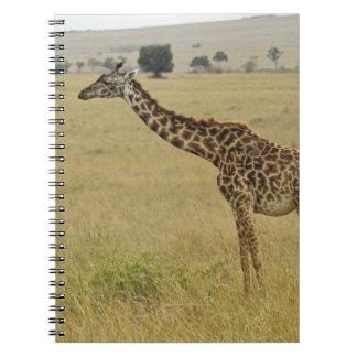 Mother and baby Masai Giraffe, Giraffa 2 Notebook