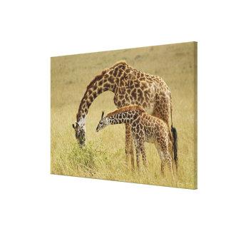 Mother and baby Masai Giraffe, Giraffa Canvas Print