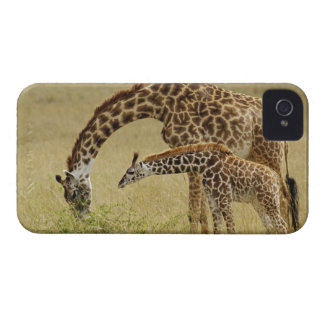 Mother and baby Masai Giraffe Giraffa Blackberry Bold Cover