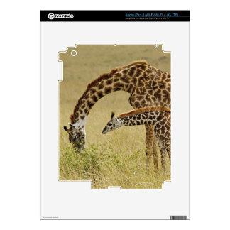 Mother and baby Masai Giraffe, Giraffa iPad 3 Decal