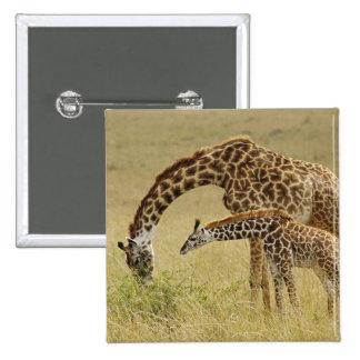 Mother and baby Masai Giraffe, Giraffa Pinback Button